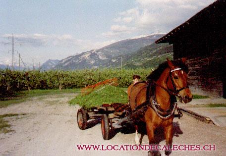 location-de-caleches-agriculture-ecologique